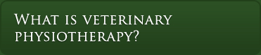 what is veterinary physiotherapy